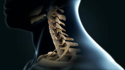 spinal cord system Footage