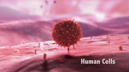 In cell biology, the nucleus is a membrane-enclosed organelle found in eukaryoti Footage