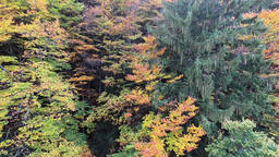 Aerial Autumnal European Forest Panorama Footage