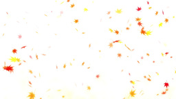 背景 紅葉 季節 秋 ループ CG動画