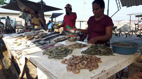 Nogombo, Sri Lanka- 2019-03-22 - Fish Vendor Organizes Piles of Shrimp Footage