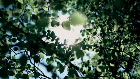 sunlight through the crown of a tree Live Action