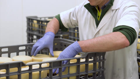 Handsome cheesemaker is checking cheeses seasoning at dairy factory in 4k UHD Footage