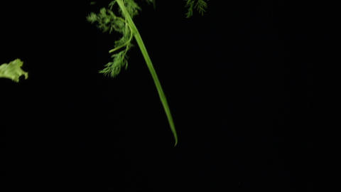 Fresh juicy organic produce, green onions and lettuce drops in slow motion on a dark background. Live Action