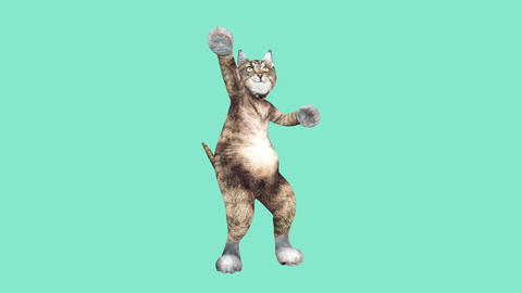 Comic brown tomcat dancing alone in a modern style in empty colour space Live Action