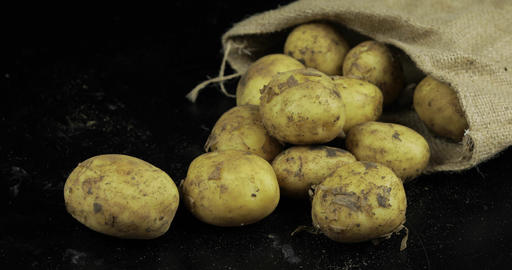 Potatoes on black surfase in a canvas bag. Fresh dirty raw potato in a pile Footage