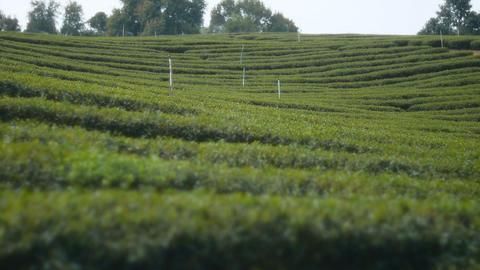 Water springer in tea farm Footage