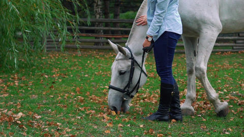 Slow Motion Young Woman Cares For Her Beautiful White Horse Live Action