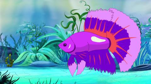 Big Purple Aquarium cockerel fish in a tank Animation