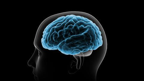 Brain Head 19 1 C1bA6 4k Animation