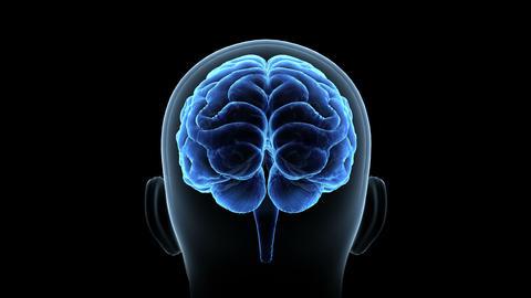 Brain Head 19 1 C1bA3 4k, Stock Animation