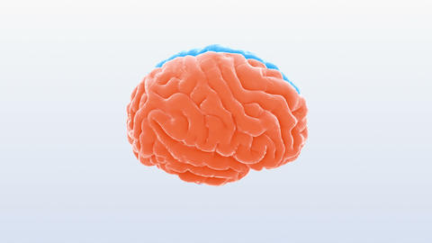 Brain Head 19 1 B1bS2 4k Animation