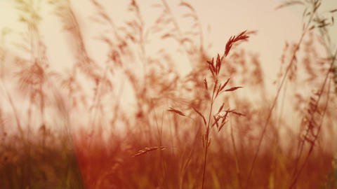 slow motion video grass sways in the wind Footage