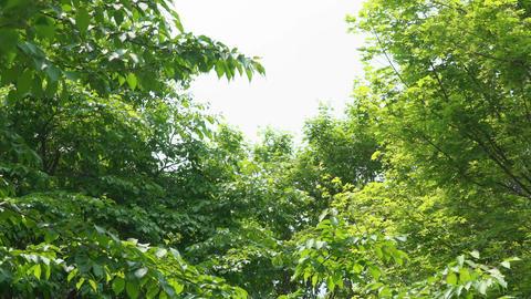 Broadleaf tree in forest Footage