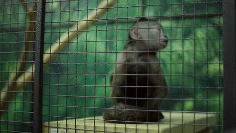 Funny monkey at the zoo Live Action