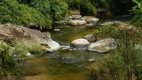 Water stream frothing on rocks in a river bank by the forest Footage