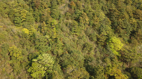 Trees in forest aerial view Footage