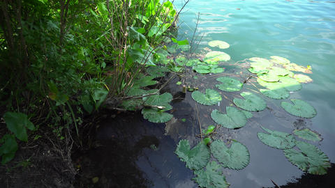 Lily pads on blue water of the Heviz Lake Footage