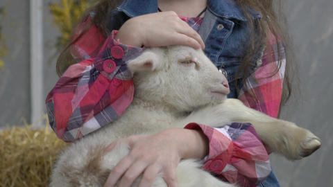 Happy Young Girl Caressing Happy Cute Kid Goat Live Action