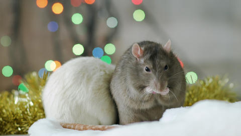 New Year Of The Rat