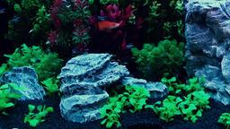 Beautiful fish in the home aquarium Footage