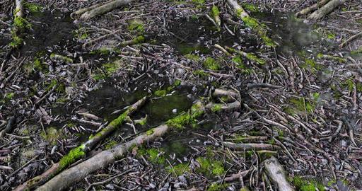 Forest Floor Loop GIF