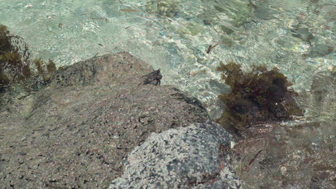 Seychelles. Praslin Island. Clear sea water rolls on the rock. Small sea crab Footage