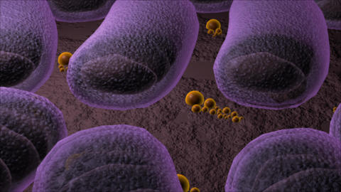 The Structure Of Generic Rod Shaped Bacteria stock footage