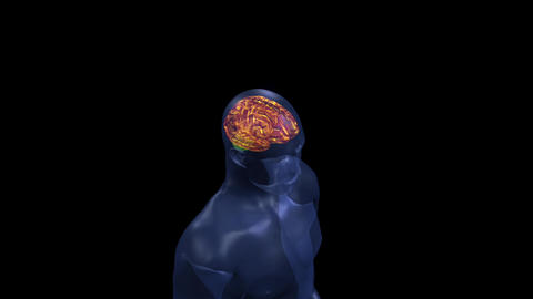 Human brain structure, Stock Animation