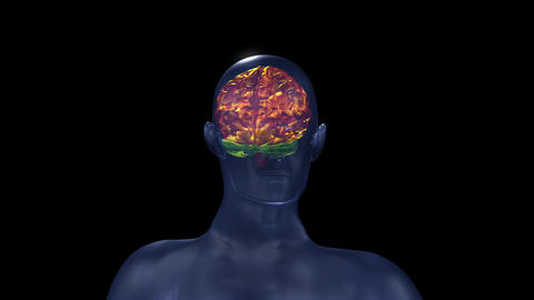 Human brain structure Animation