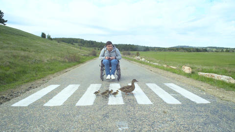 Disabled Man Look At Mother Duck And Ducklings Footage