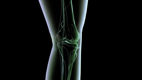 X-ray style animation of knee joint Animation