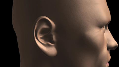 The internal structure of the human ear Animation