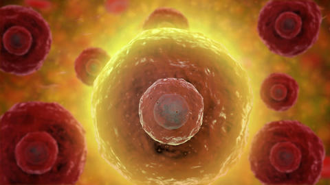 B-cells moving inside their environment Animation