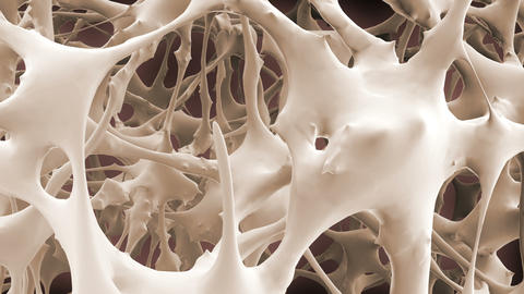 Matrix of bone fibers Animation