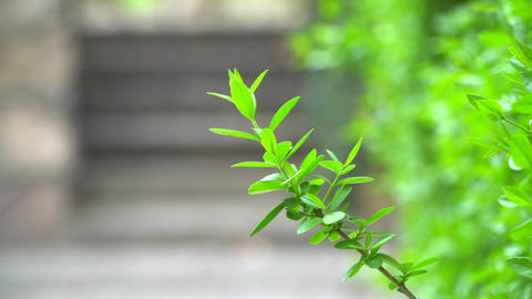 green leaf of a shrub Live Action