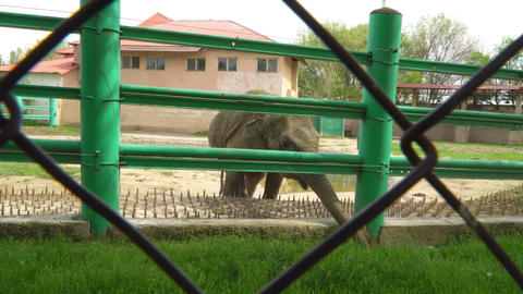 elephant in the zoo Footage