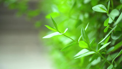 green leaf of a shrub Footage