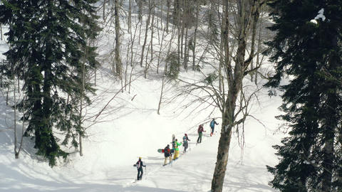 Tourist people hiking on ski in snowy forest while winter vacation. Group traveling people ski Footage