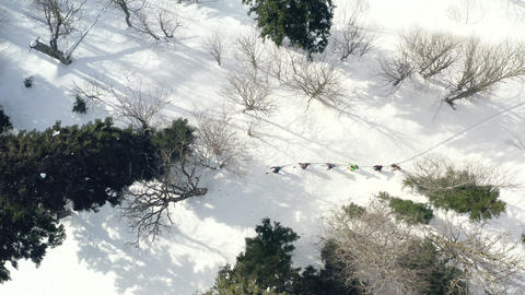 Aerial view skier hiking on ski in winter forest. Ski touring in snowy forest. Group tourist people Live Action