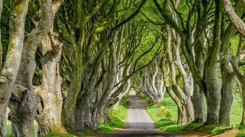 The Dark Hedges of Stranocum in Northern Ireland Footage