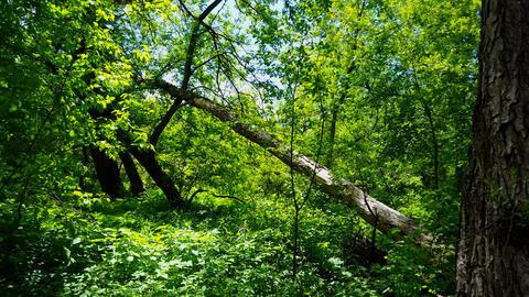 Forest Interior 01