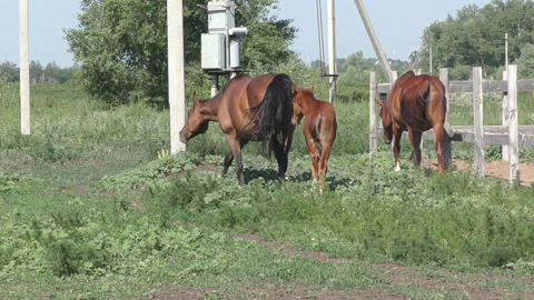Foal at the farm Footage