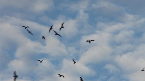 birds flying high in the blue sky Footage