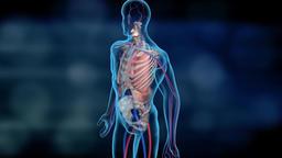 3D medical animation of human internal organs in transparent on black background Footage