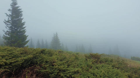 Cold wind blowing on the top of a mountain hill with pine and fir trees evergreen standing in the Footage