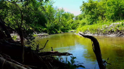 Beautiful Flowing River Surrounded By Forest Trees in Summer. Viewpoint From Treelined River Shore Footage