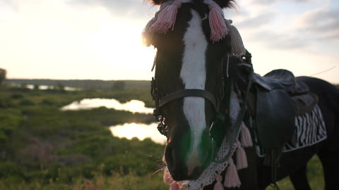 A muzzle of an ornate horse close up at sunset in slow motion Live Action