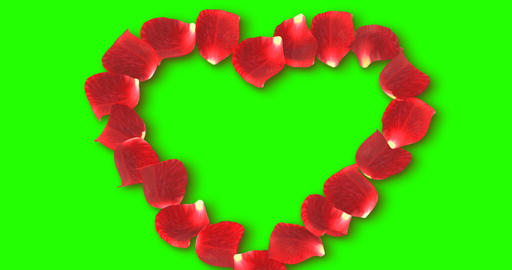 red rose petals flying for composing red heart shape of petals on chroma key, green screen Footage
