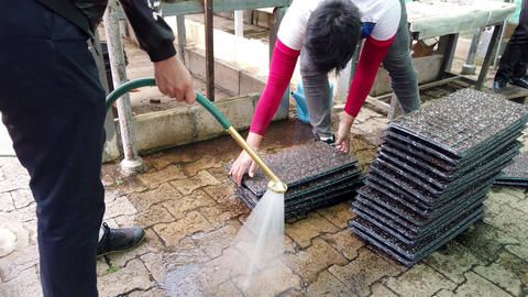 Mae Saiong. Thailand - 2019-03-11 - Volunteers Drench Greenhouse Flower Beds Footage